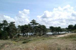 Zuid-Kennemerland Vogelmeer wandelen duinen