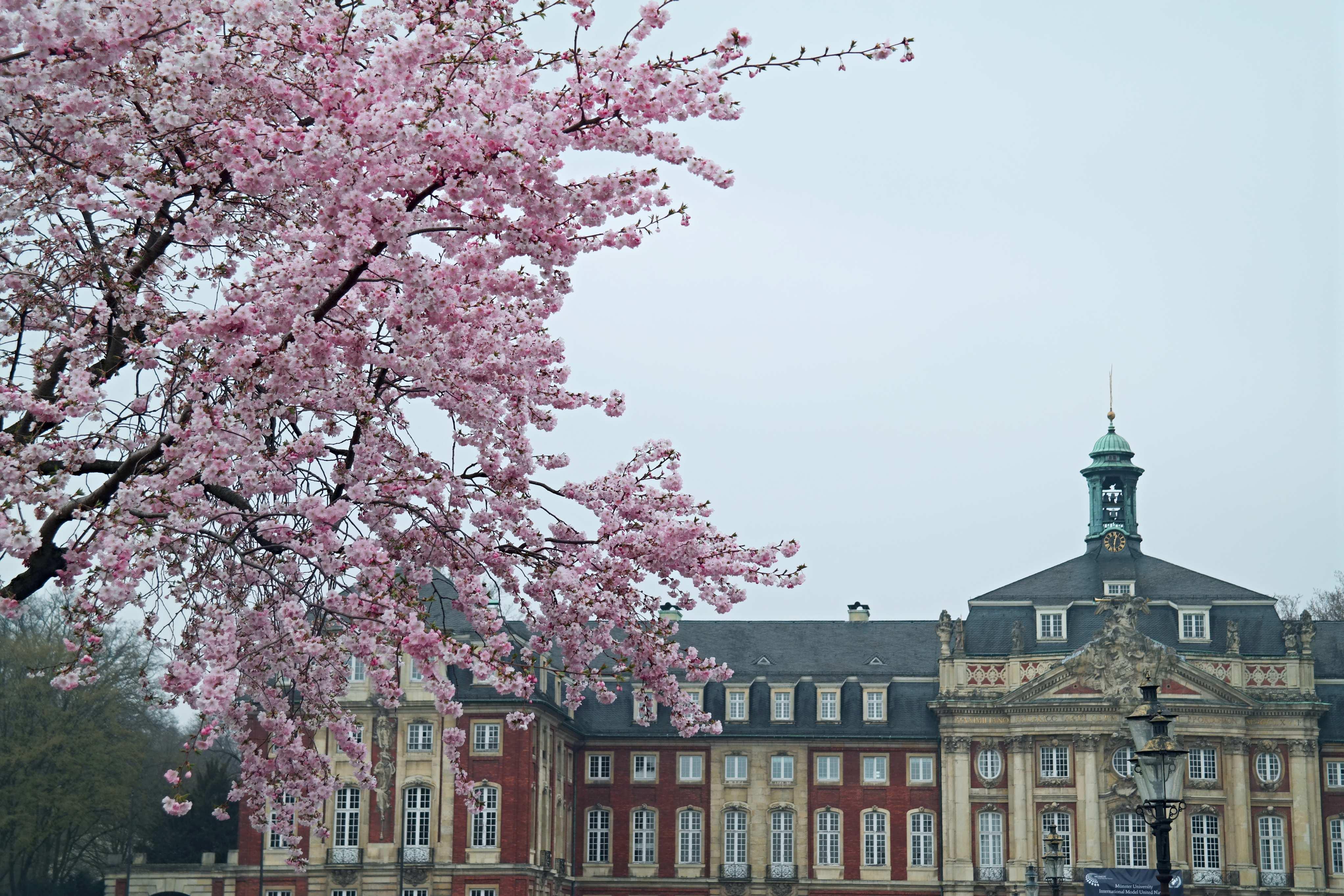 Wat te doen in Münster